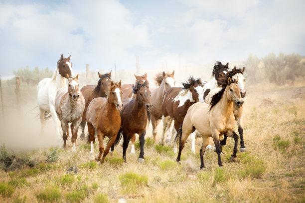 自由马兽群
