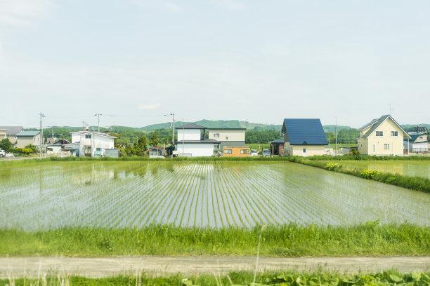 北北海道稻田