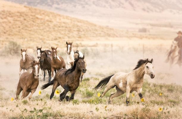 自由牛仔跑