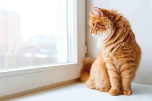 坐在窗台的猫咪