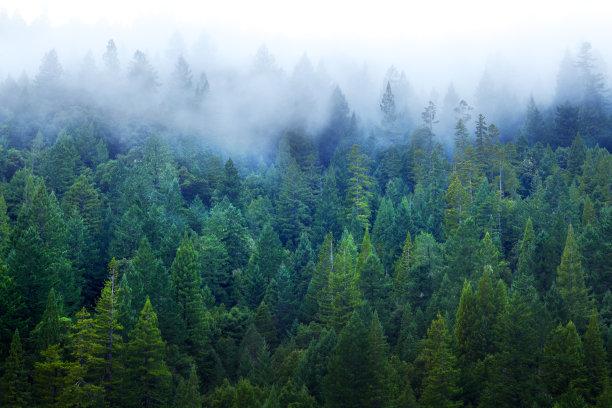红木森林雾留白