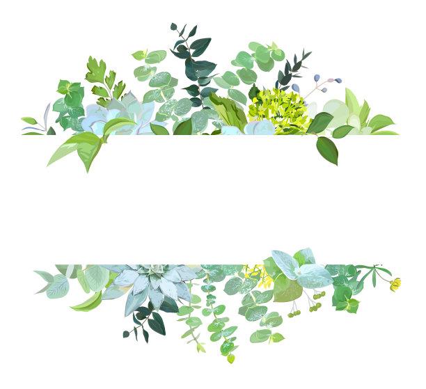 植物学矢量图片