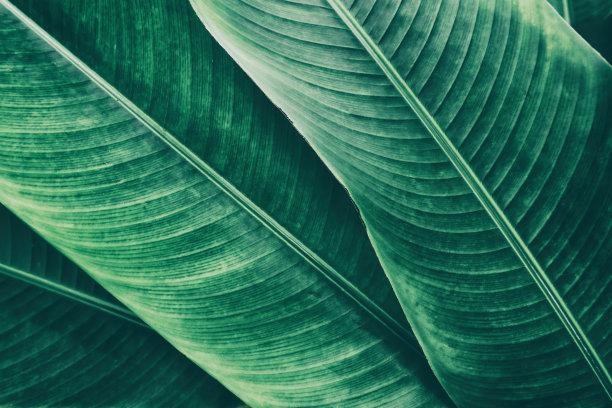 棕榈叶背景图片