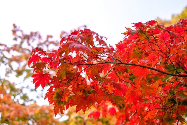 彩色图片叶子季节