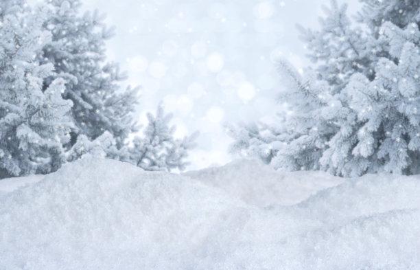 冬天松树地形