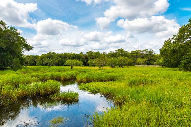 湿地地形佛罗里达