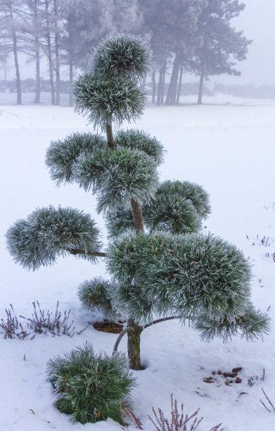 冬天盆景有包装的