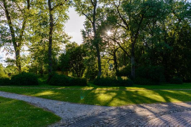 森林,非都市风光,空的路