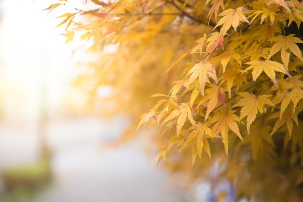 季节秋天日本