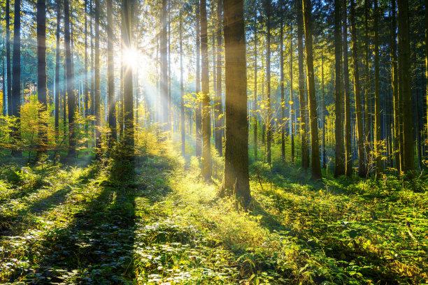 日光森林自然