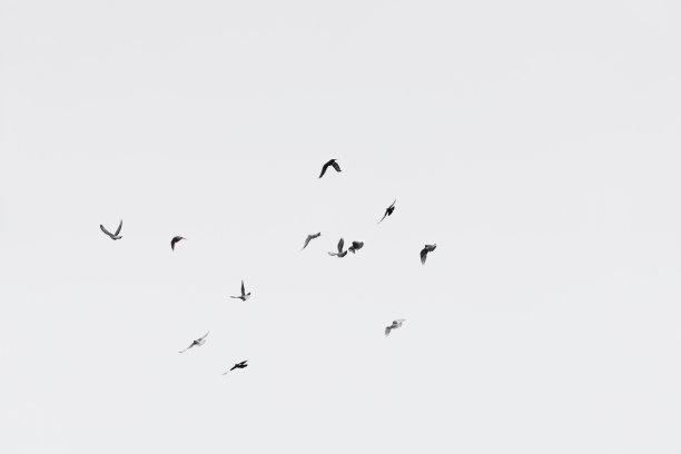 白色天空的鸟类