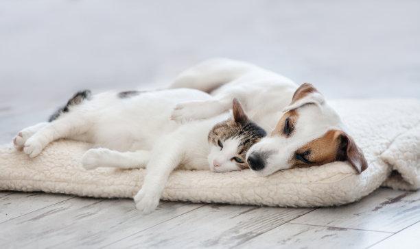 猫和狗一起睡觉