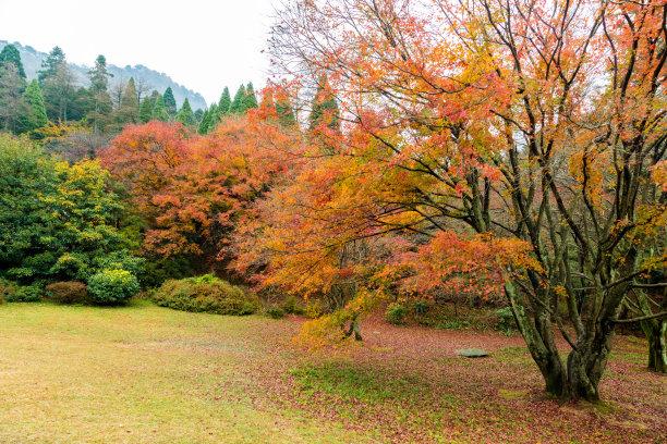 彩色图片山秋天