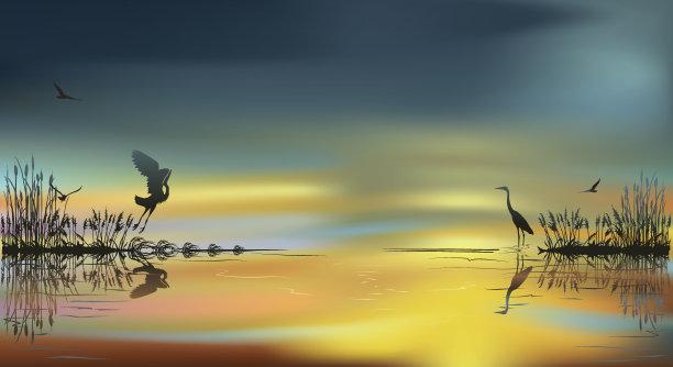 日落苍鹭湿地