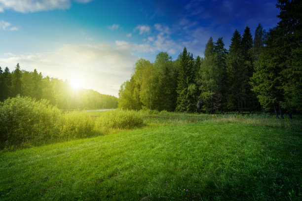森林湖自然美