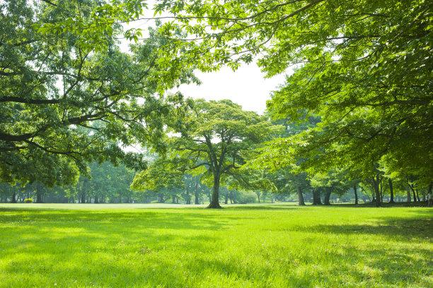 生食树林庭院