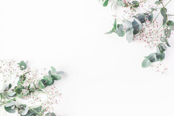 水香花菜桉树图片