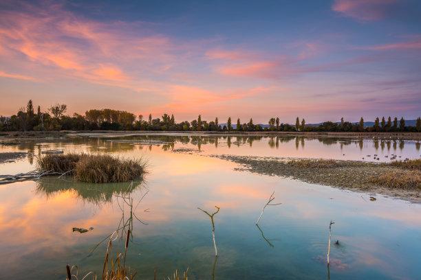 沼泽多色的水