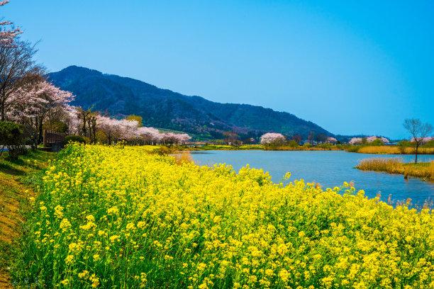 春天自然美