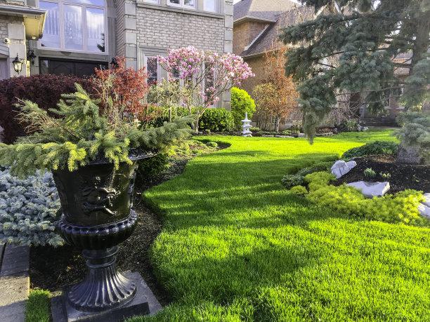 花园绿草地