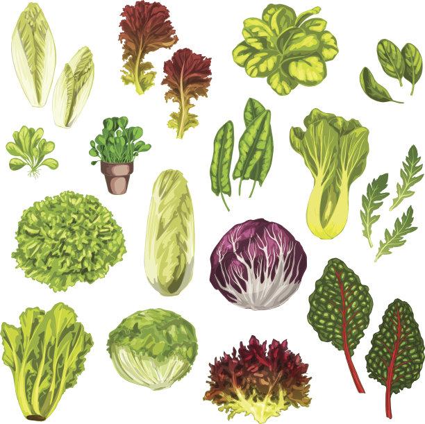 草本蔬菜蔬菜叶