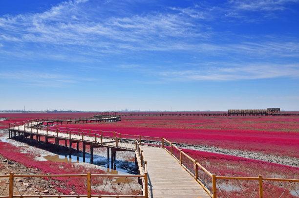 盘锦红海滩风景区美风