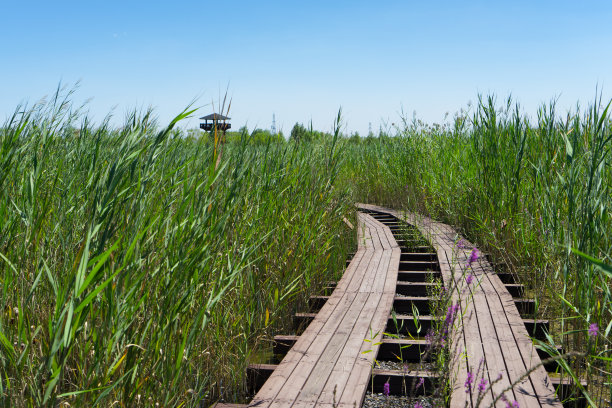 湿地路凉棚
