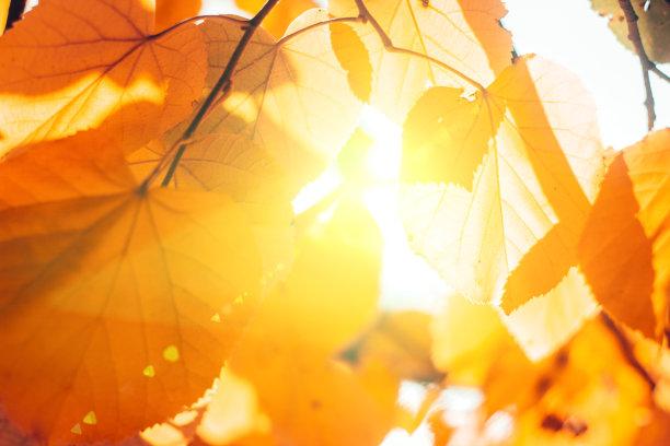 叶子秋天天空