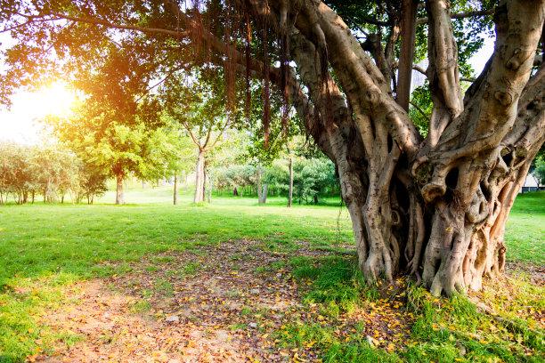 古老的树干公园