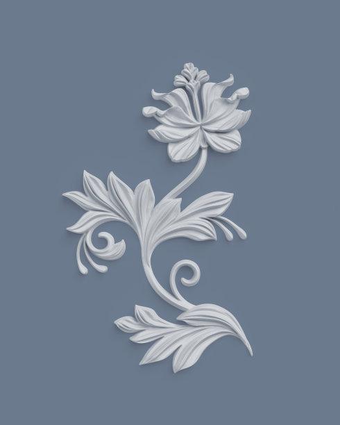 白色植物学图片