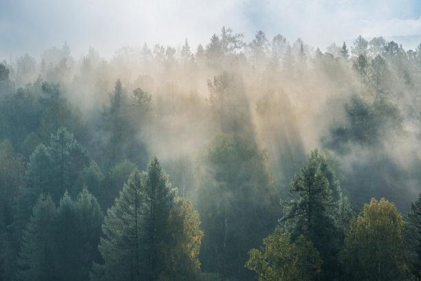 雾黎明小溪