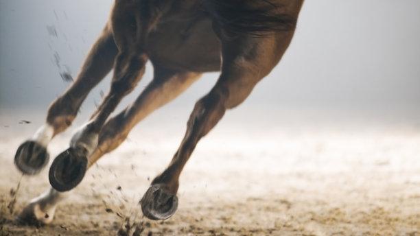 马动物腿黑色背景