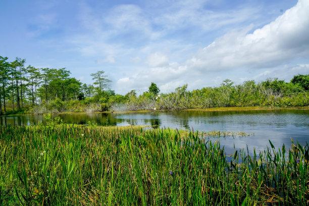 夏天沼泽河流