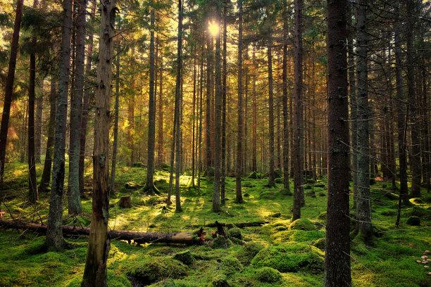 苔藓绿色森林