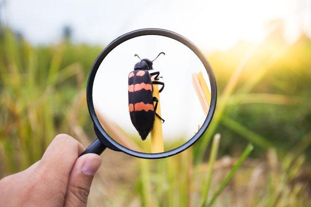 放大镜观察昆虫