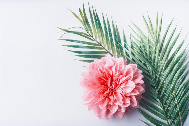 花叶组合背景