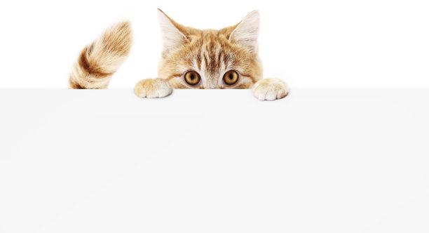 猫抓手写板
