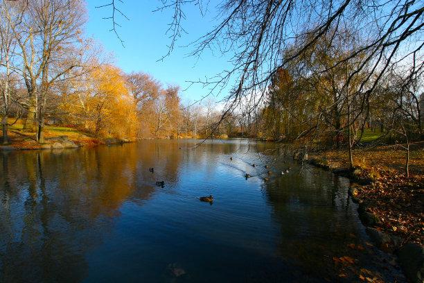 鸭子,中央公园,十一月
