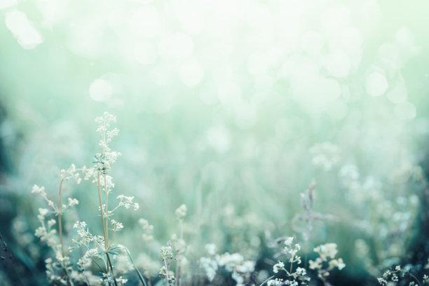 早晨的青草