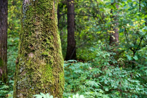 树上的苔藓