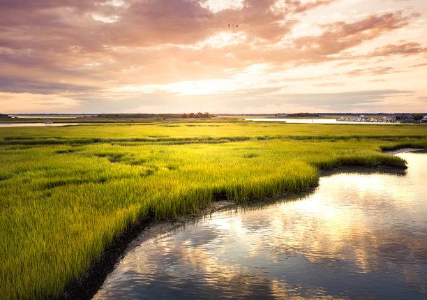 沼泽航拍视角水