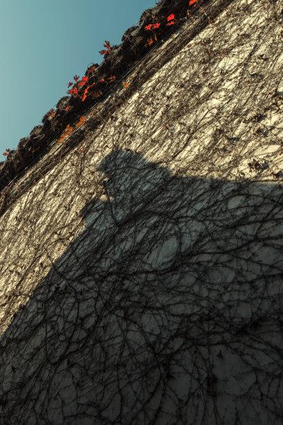 屋顶清朝垂直画幅