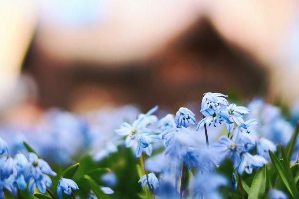 斯库拉蓝色木制