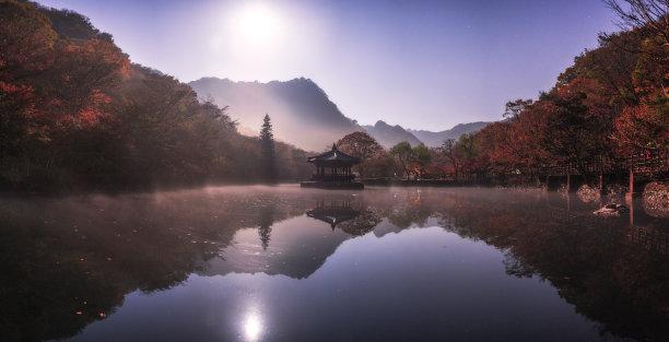 枫树,韩国,秋天