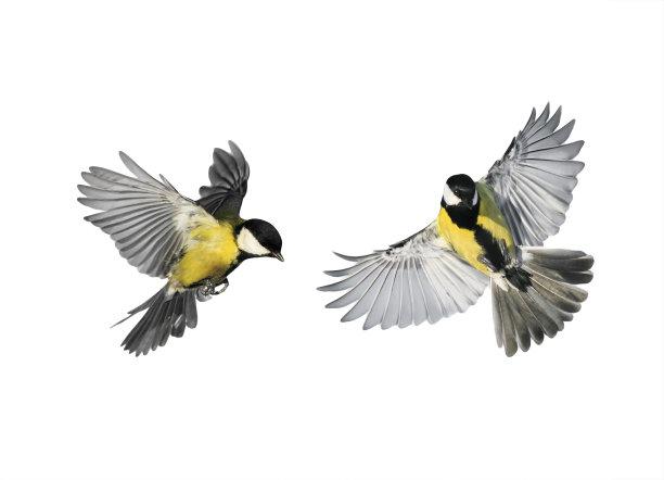 白色背景上飞翔的鸟类