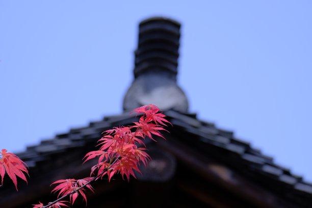 红花槭屋顶前面