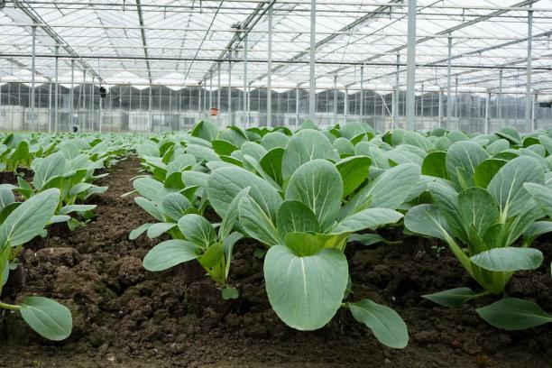 温室巨大的植物群