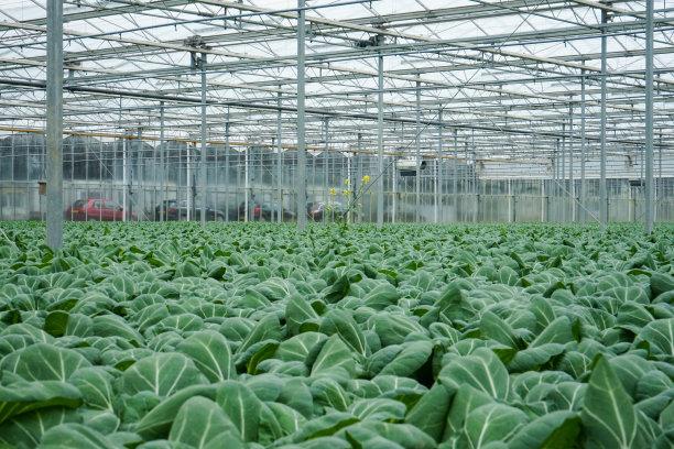 温室植物群巨大的