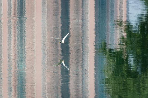 水建筑外部小白鹭