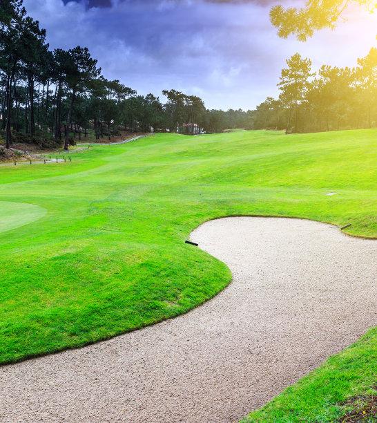 高尔夫球运动,沙土障碍,松树